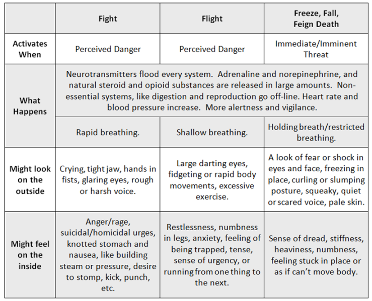 nervous-system-chart